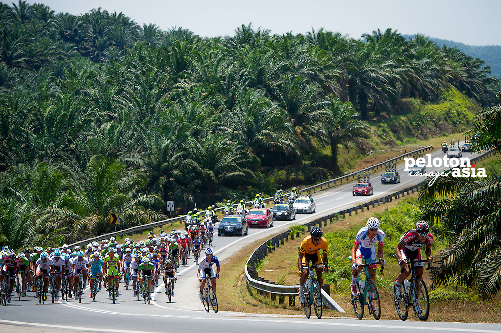 2014 Le Tour de Langkawi / stage10 / langkawi / palm tree / SYNERGY BAKU CYCLING PROJECT / ANDRONI - VENEZUELA / MALAYSIA National team