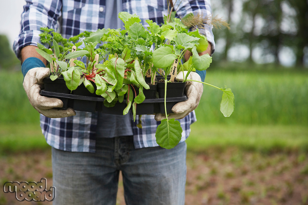 Man holding plants in field mid section