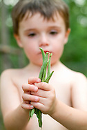 A little boy holds beans that he grew in his first vegetable garden.