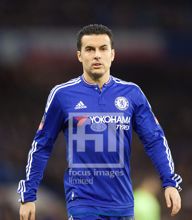 Pedro of Chelsea during the FA Cup match at Stamford Bridge, London<br /> Picture by Alan Stanford/Focus Images Ltd +44 7915 056117<br /> 21/02/2016
