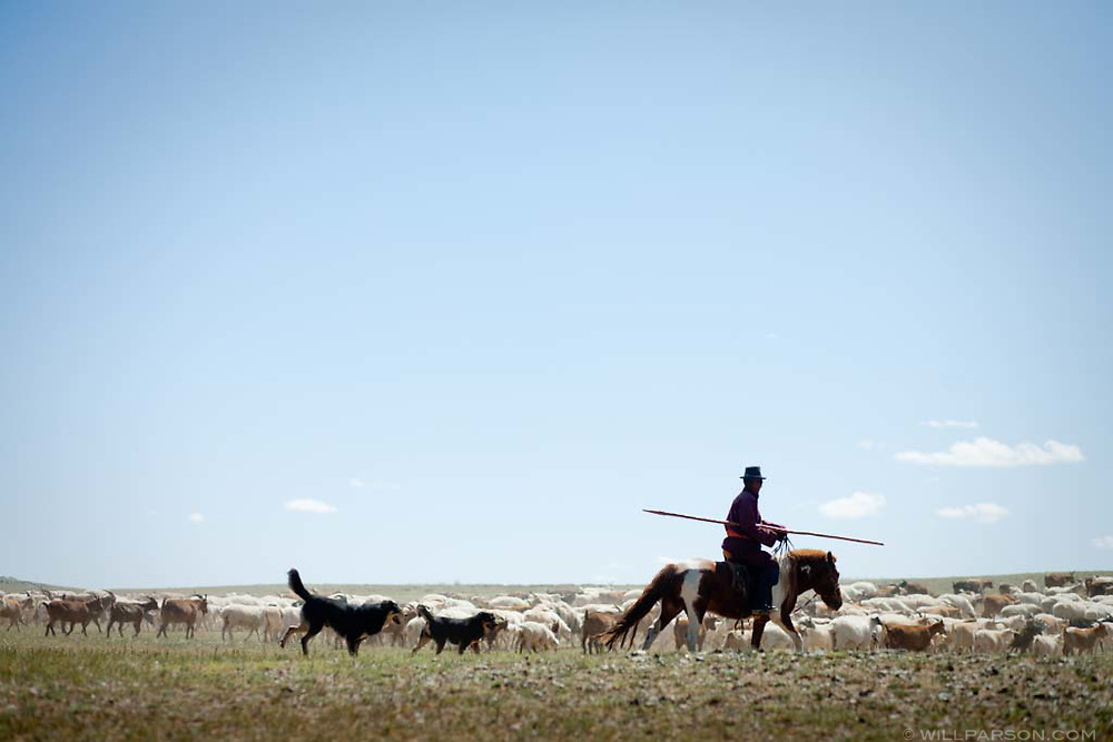 A man's herd in Govi-Altai Province contains a mix of sheep and goats.
