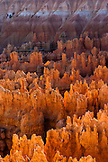 Late afternoon light sets the hoodoos aglow on Bryce Canyon National Park, Utah