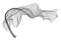 X-ray image of a dried banana leaf (Musa, black on white) by Jim Wehtje, specialist in x-ray art and design images.