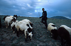 TURKEY DOGUBEYAZIT JUL02 - Nomadic shepherds attend a flock of sheep in the mountains near Dogubeyazit. ..jre/Photo by Jiri Rezac..© Jiri Rezac 2002..Contact: +44 (0) 7050 110 417.Mobile:  +44 (0) 7801 337 683.Office:  +44 (0) 20 8968 9635..Email:   jiri@jirirezac.com.Web:     www.jirirezac.com