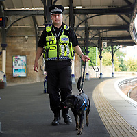 Fighting Serious and Organised Crime in Tayside.....21.09.10<br /> Tayside Police joined forces with British Transport Police to crack down on drug trafficking in the Tayside area. Officers from Tayside's drug branch joined specialist dog handlers to search travellers at perth railway station...  Pictured British Transport Police Officer Ray Martin with his drugs dog 'Gem' on one of the platforms.<br /> Picture by Graeme Hart.<br /> Copyright Perthshire Picture Agency<br /> Tel: 01738 623350  Mobile: 07990 594431