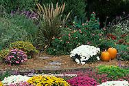 63821-12910 Fall Garden - Chrysanthemums, pumpkins, Mexican Sage, Japanese Blood Grass, Sedum Autumn Joy & Lantana Marion Co.  IL