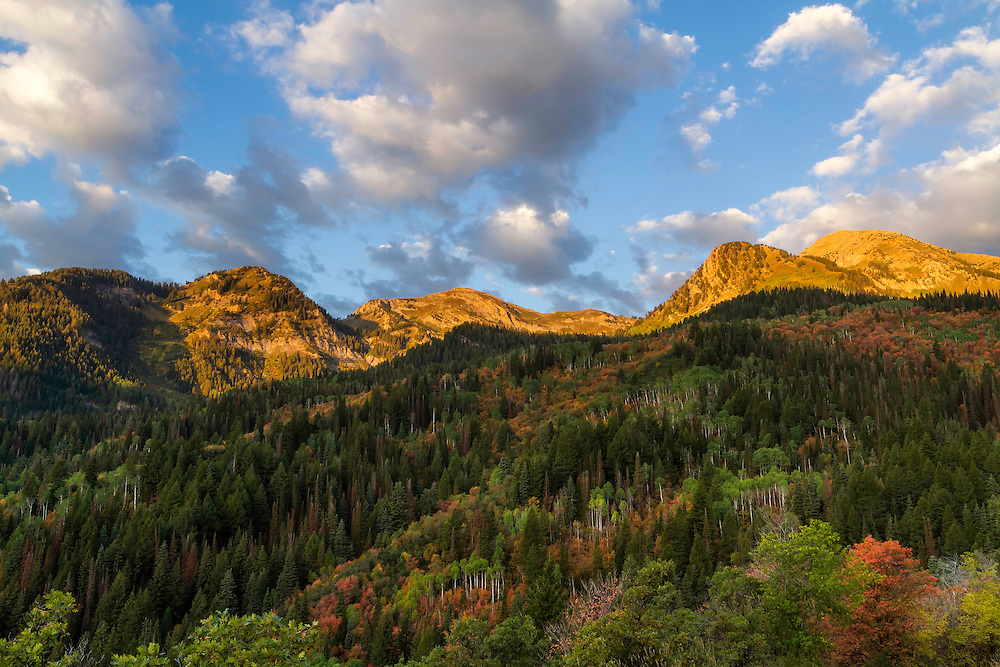 Fall colors and the bright sunlight of a Fall sunrise shines light on the mountainside in American Fork Canyon, Utah.
