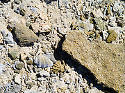 Weathered coral on the beach, Lady Musgrave Island, QLD, Australia