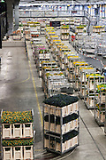 automated flower tranport inside the large warehouse hall of FloraHolland Aalsmeer Netherlands