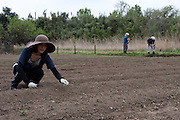 Tomomi Kanno (left) working at the Arigato Farm project, Ogawa Machi, Iwaki, Fukushima, Japan. Sunday May 6th 2012