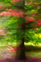 Abstract rendition of wispy Autumn colors on a tree.