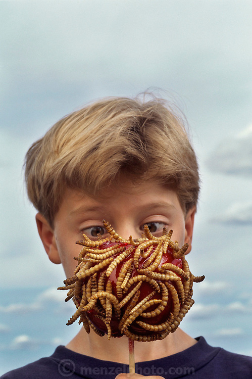Eric Pihl, 8, of Napa, California, looks at a candied apple covered with dried mealworms from Hotlix Candy Factory, Pismo Beach, California. Image from the book project Man Eating Bugs: The Art and Science of Eating Insects.