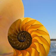 Seashell. Water MIll, NY