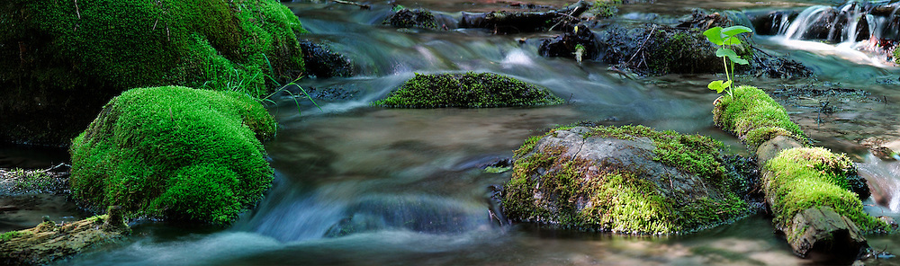 Multi-shot stitch of a sun dappled brook flowing through the Ganaraska Forest.