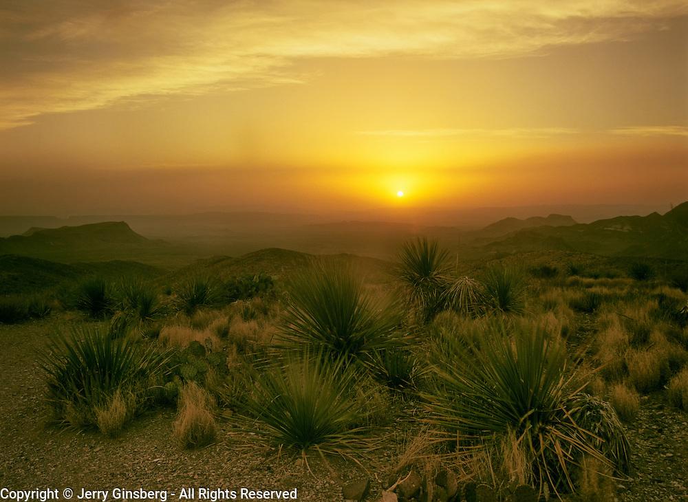 North America, United States, Southwest, West, Big Bend, Big Bend National Park. Hardy sotol surviving in rugged Big Bend National Park in Southwest Texas.