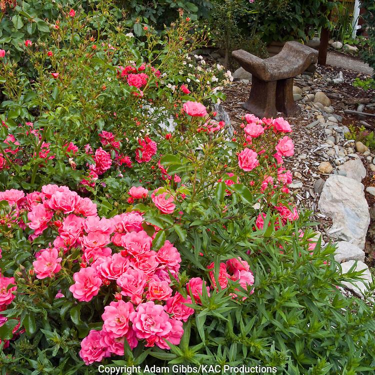 garden sculpture and roses