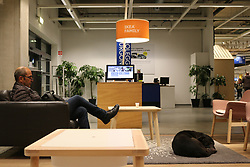 Italy, Catania - November 19, 2018.A Swedish furniture retailer Ikea, has opened its doors to stray dogs and let them sleep in its beds, sofas and carpets exposed for customers.File dated Monday November 19, 2018. (Credit Image: © Dario De Luca/Ropi via ZUMA Press)