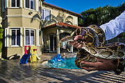 An invasive species in the United States, the ever pervasive Burmese Python is illegal to have as a pet, but yet still exists in the pet trade. SOUTH FLORIDA A private residence in in Miami, FL showing that there are still people in suburban areas that have burmese pythons as pets.