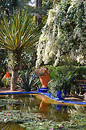 White bougainvillea cascading over an ornamental pond containing water lilies at the Majorelle Garden in Marrakech, Morocco