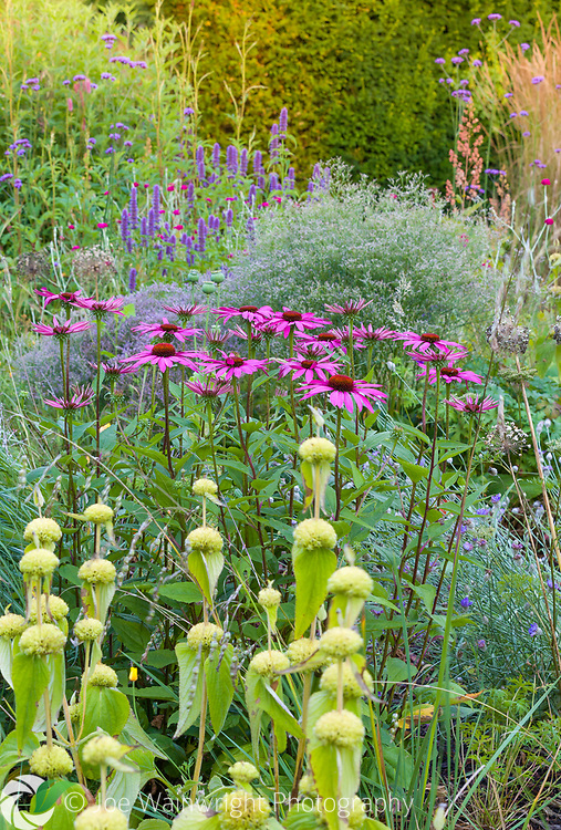 Herbaceous borders at Bluebell Cottage Gardens, Dutton, Cheshire, designed by Sue Beesley. Photographed in July. Planting includes Echinacea purpurea, Agastache, Lychnis coronaria and Verbena bonariensis