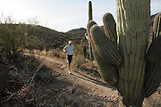 Starr Pass Trail, Tucson Mountain Park, Tucson Mountains, Sonoran Desert, Tucson, Arizona, USA.