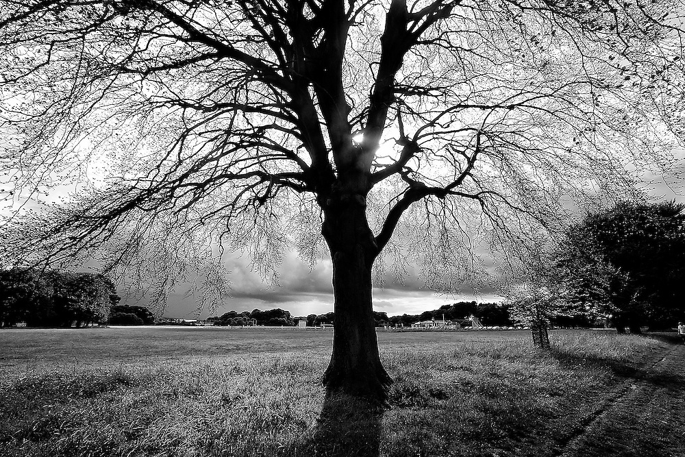 Old but Vast<br /> A tree in Dublin, Ireland