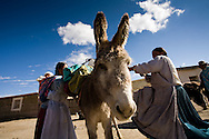 Cholitas loading gear onto burros before trekking into the basecamp of Mt. Tuni Condoriri in winter, in the Cordillera Real, Bolivia.