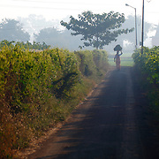 A WOMAN GOING THROUGH A VINEYARD, ON A FOGGY MORNING, INDIA. IN INDIA THOUGH WOMAN ARE NOT ACTIVE SO MUCH IN CORPORATE WORLD, BUT IN AGRICULTURE WOMAN TAKE ACTIVE PART, AND MOST OF THEM ARE RESPONSIVE & SENSITIVE TO CROPS AND THEIR WORK. WE ARE PROUD!!