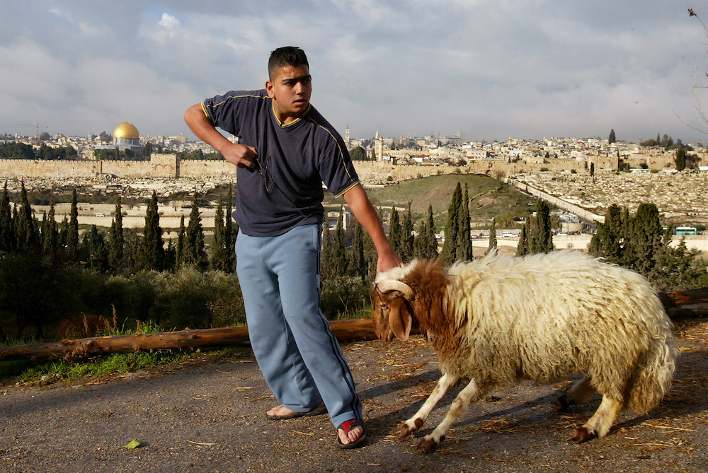 **ISRAEL OUT**..A Palestinian drags a sheep before slaughtering it on the occasion of Eid al-Adha, or the Muslim Feast of the Sacrifice, on a hill overlooking Jerusalem's old city, Wednesday, Dec. 19, 2007. The festival commemorates the story of Abraham and his readiness to sacrifice his son as an act of obedience to God, who provided a lamb to be used instead. Photo by Olivier Fitoussi /FLASH90..**ISRAEL OUT**