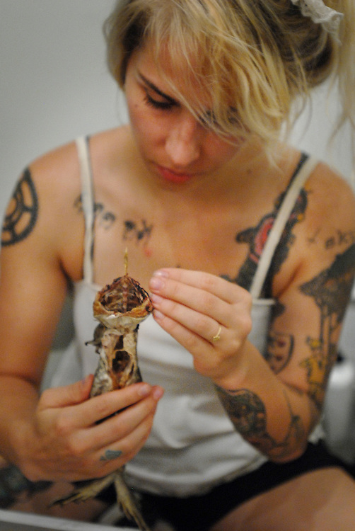 Sorceress Cagliastro makes mummies (animals, organs etc)  for collection or for specific sorcery. Here she teaches a class in the mummification at the Observatory in Brooklyn. A Bull Frog (sourced from the food industry). After it's organs are removed (some can be mummified and replaced) it is  dessicated with embalming salt and then wrapped in linen and painted with resin. ..Picture shows Binding and wrapping of the mummy. Cotton linen is wrapped tightly around the body and sealed with wax. During the dissection the head is removed and must be replaced before the binding this is done with a toothpick protruding from the neck.