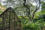 """A Hale Mua, or men's eating house, has been reconstructed on historic stone foundations in Waimea Valley on Oahu: in Hawaiian culture, kane (males) met to eat, pray and discuss matters in this important ceremonial hut. Waimea Valley is a historical nature park with botanical gardens, at 59-864 Kamehameha Highway, Haleiwa, on the North Shore of island of Oahu, Hawaii, USA. Formerly known as """"Waimea Valley Audubon Center,"""" since 2008 the garden has been managed by Hi'ipaka LLC, a non-profit company created by the Office of Hawaiian Affairs. Hawaii is the northernmost island group in Polynesia."""