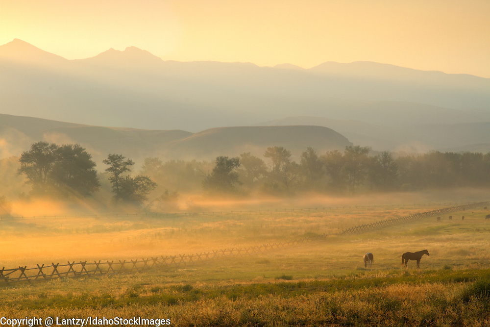 Idaho, East Central, Lemhi County, Salmon. Horses graze in a misty pasture in the Salmon River Valley at dawn in summer.