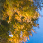 Nature photograph of autumn leaves floating on a lake filled with reflections of autumn color.