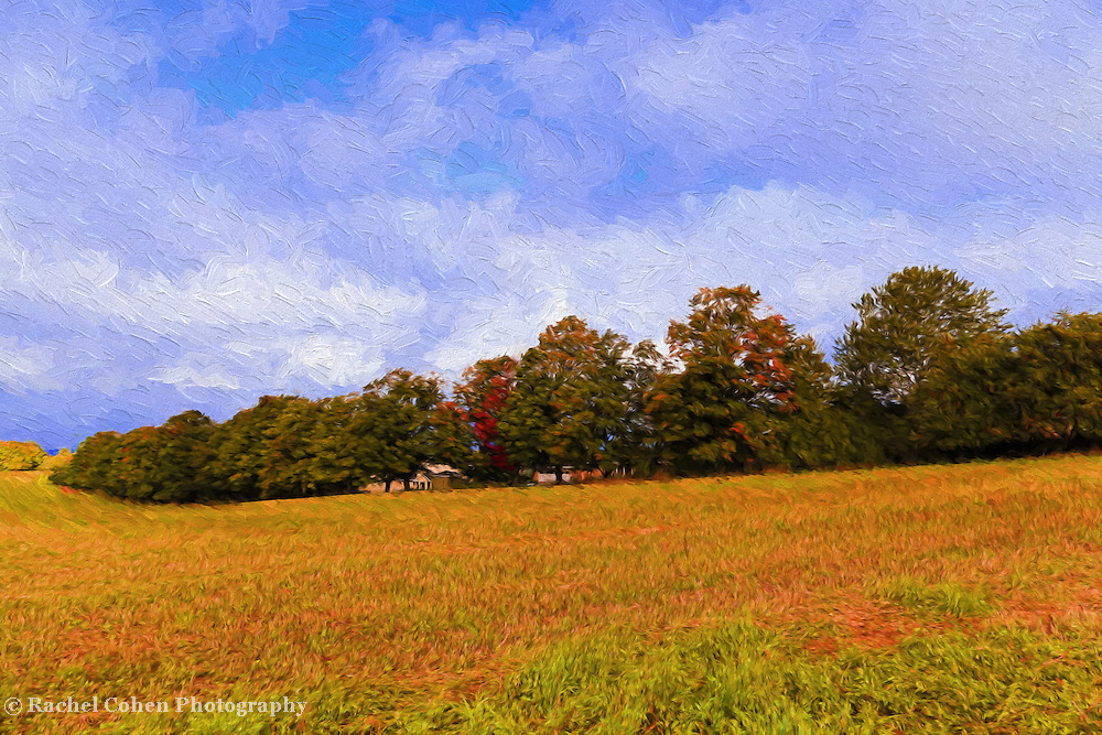 &quot;Autumn Hills Painting&quot;<br /> <br /> Lovely autumn scene outside of Charlevoix Michigan on an early fall day! Golden fields, trees with a hint of fall color, and beautiful blue skies with white clouds!