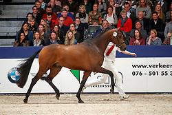 411, Key Express<br /> KWPN Stallionshow - 's Hertogenbosch 2018<br /> © Hippo Foto - Dirk Caremans<br /> 03/02/2018