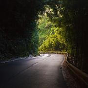 Sun at the End of the Jungle Tunnel on the Hana Road. Maui HI.