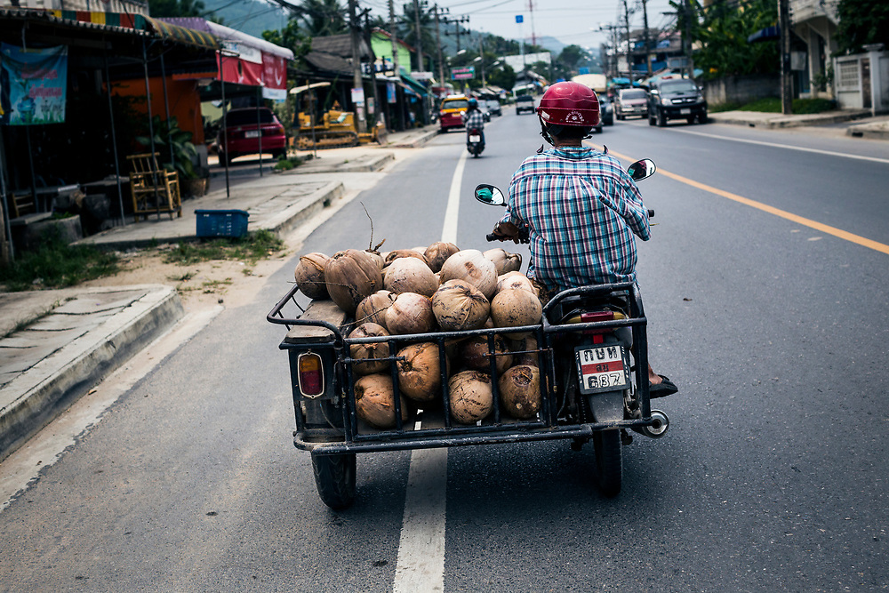 A woman carries a load of fresh coconuts on her motorbike in Koh Samui, Thailand.