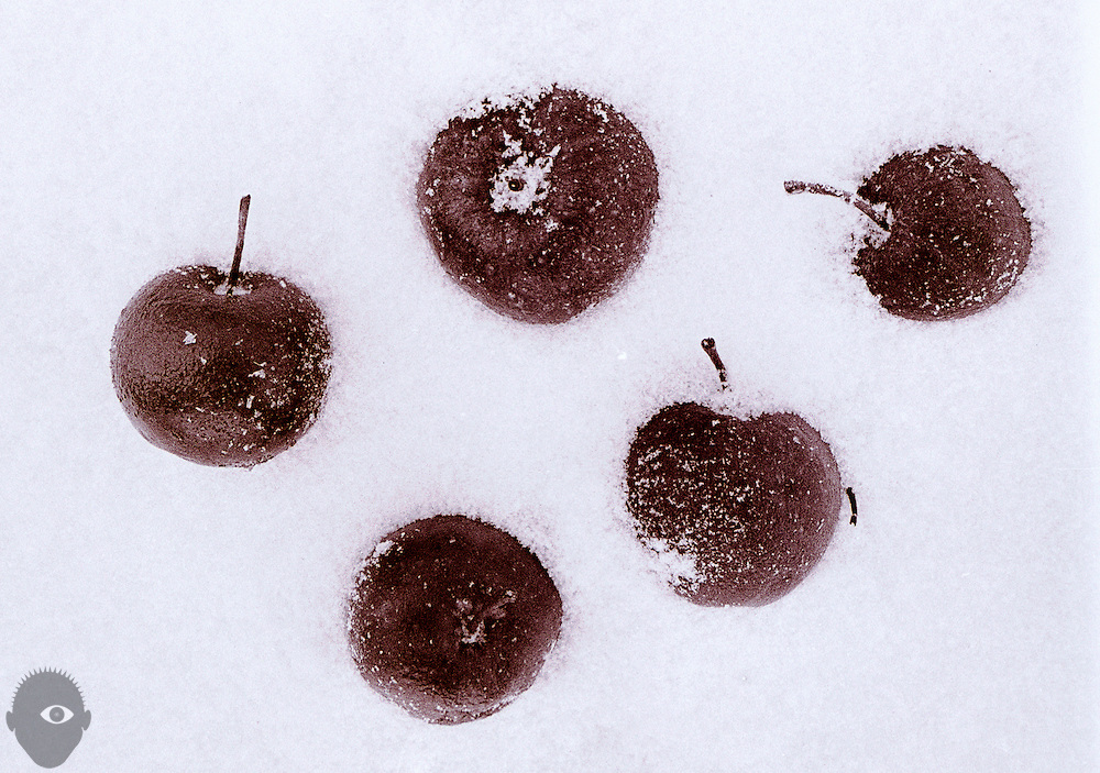 Apples lie partially snow-covered as winter in the midwest arrives.