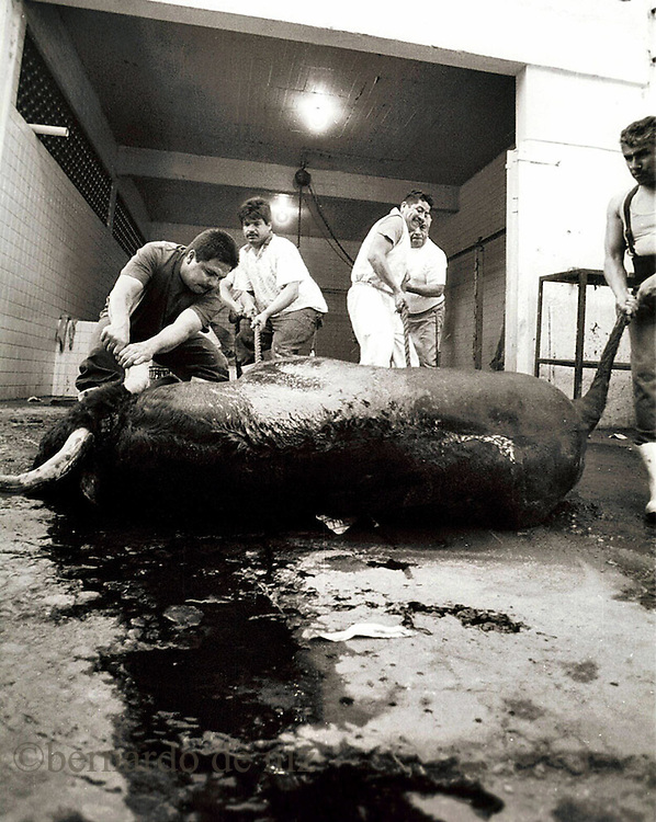 Workers of the plaza, charge the body of a dead bull after the   bullfigther kill it in the show.