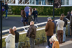 Horses in the parade ring before the Racing TV Apprentice handicap stakes at Kempton Park Racecourse, Esher.