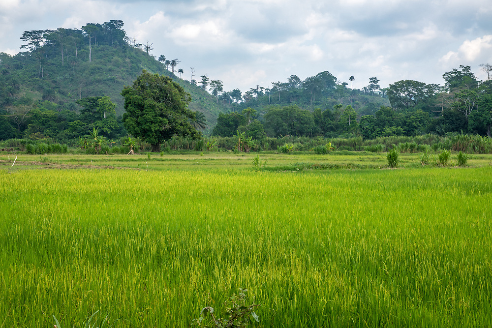 Rice field and mountains off in the distance, Gbedin village, Nimba County, Liberia