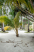 INDONESIA, Karimunjawa Archipelago, Kura Kura Resort garden