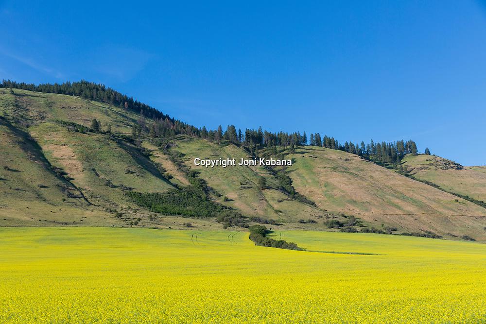 Landscape near Summerville, Oregon