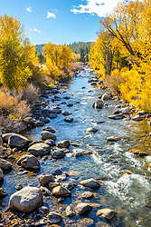 """Truckee River in Autumn 25"" - Photograph of the yellow leaves on Cottonwood trees along the Truckee River in Downtown Truckee, California."