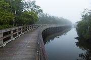 A wood walkway curves into the foggy distance with water and mangroves surrounding it in this landscape photograph taken at Robinson Preserve in Bradenton, Florida
