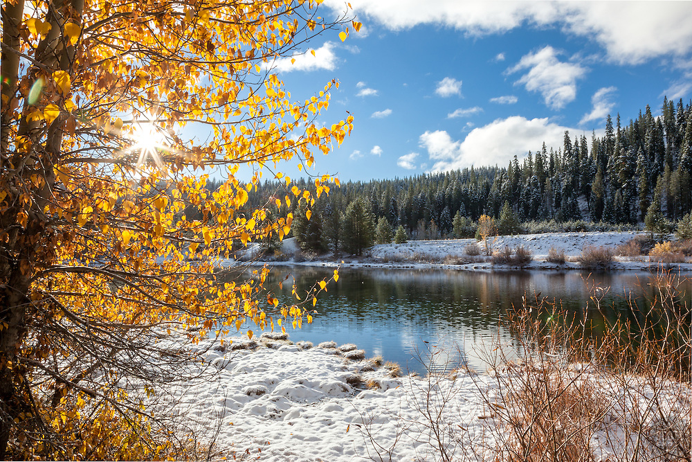 """Snowy Coldstream Pond 3"" - This yellow leaved Cottonwood tree was photographed at a snowy Coldstream Pond in Truckee, California."