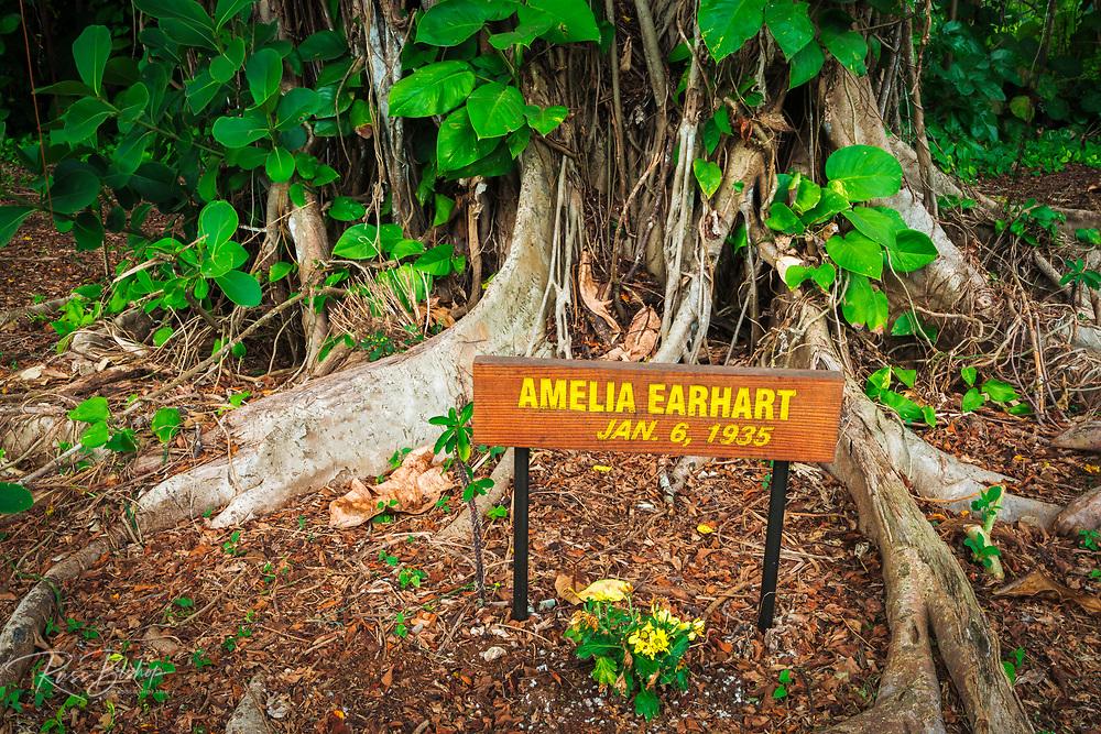 Celebrity planted banyan tree (Amelia Earhart) on Banyan Drive, Hilo, The Big Island, Hawaii USA