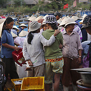 At the early morning fish market in Hoi An, Vietnam.
