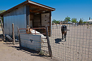 Marfa, Texas, horse, goat, pasture in town