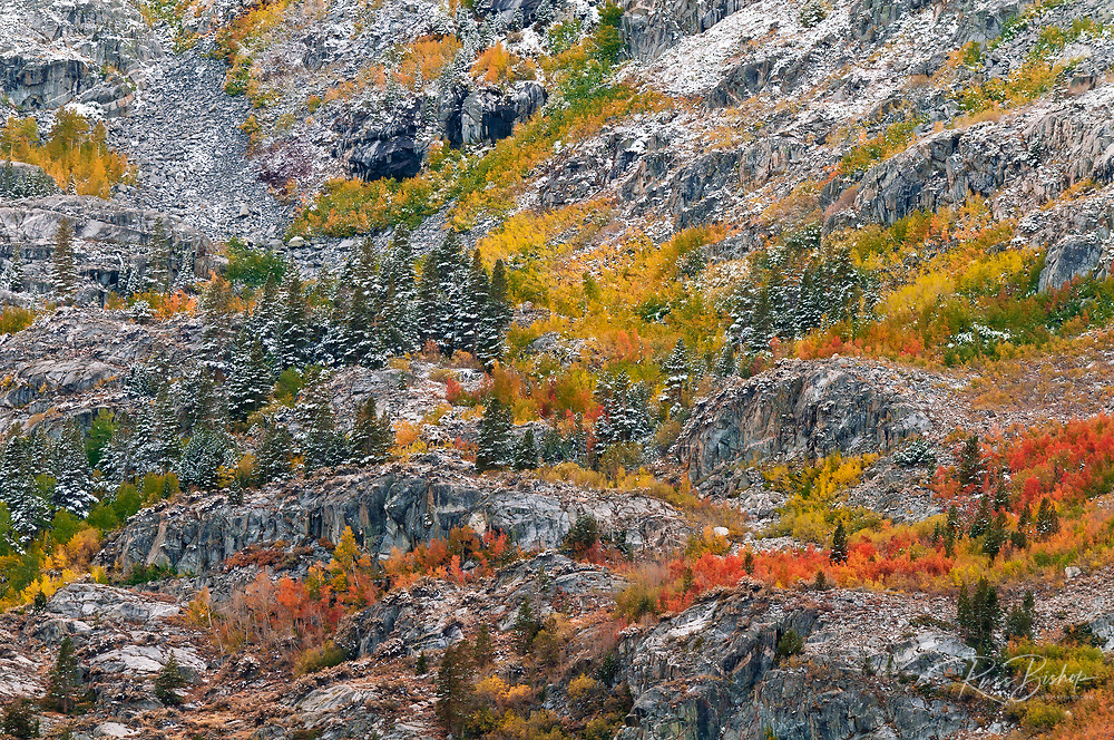 Autumn hues and fresh powder, John Muir Wilderness, Sierra Nevada Mountains, California USA